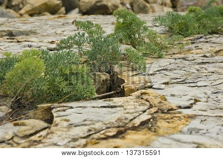 Plants are forced to destroy the rocks to survive in harsh conditions. background