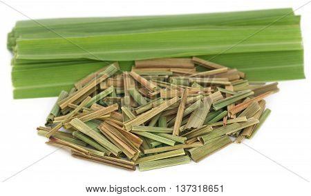 Close up of Lemongrass over white background