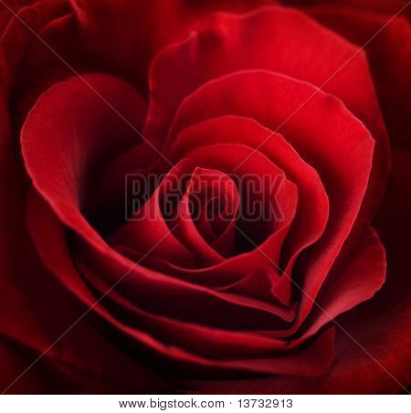 Valentin Red Rose.Heart geformt