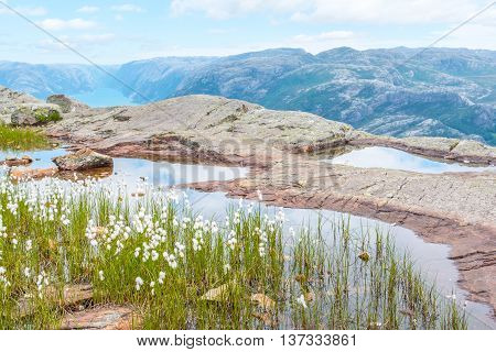 Norwegian mountains and fjord with cotton wool on the edge of a pond in the front of the photo