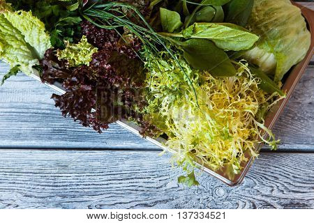 Frisee and lettuce on tray. Green herbs on wooden background. Fresh from the farm. Improve your health.
