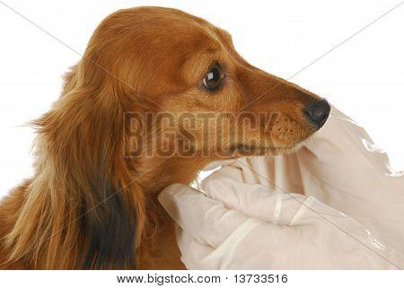 Cuidados veterinários