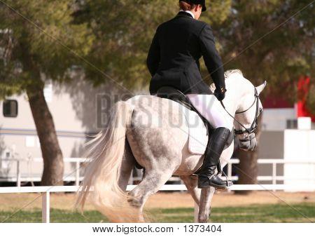 Grey Arab Rider