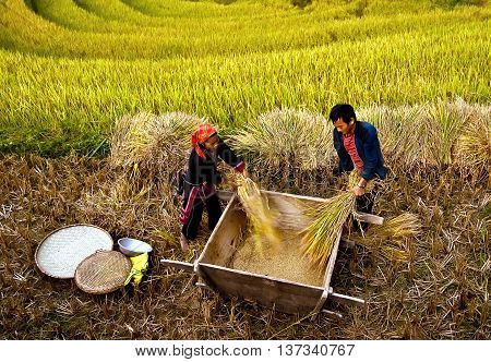 HA GIANG, VIET NAM, September 24, 2015 ethnic Hmong couple, high mountains, Ha Giang. Rice harvest, the rice terraces