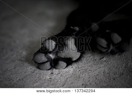Black and white dog paw pads. Close-up view.