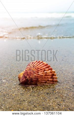Colorful Shell In Sand And Waves At The Beach