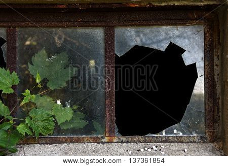 Large black hole in broken windowpane with ivy leaves and rusty frame.