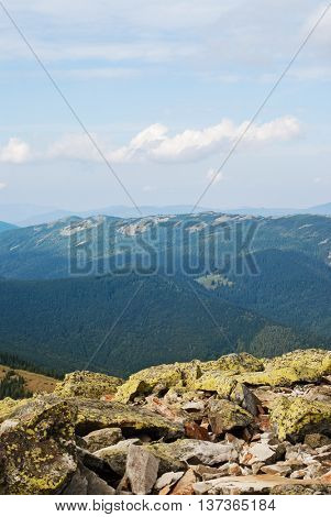 mountain landscape with evergreen tree. nature