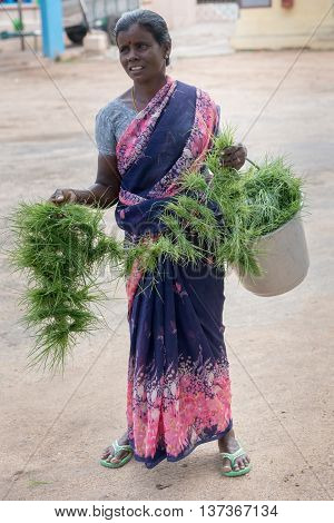Tamil Nadu India - October 18 2013: Pillayarpatti Karpaga Vinayagar temple. Woman on street sells bundles of grass to be offered to Ganesha in the temple.