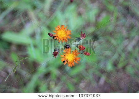 orange wild flower top view forest ground