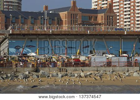 VALPARAISO, CHILE - JULY 1, 2016: American Sea Lions (Otaria flavescens), Kelp Gulls (Larus dominicanus) and Peruvian Pelicans crowd around the fish market in the port city of Valparaiso in Chile.