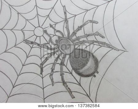 graphic picture of spider, picture of spider, рисунок паука, графический рисунок