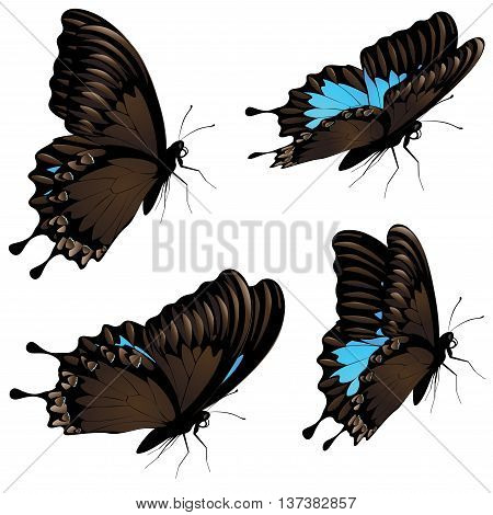 Mountain Swallowtail Set