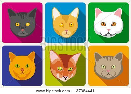 Cat portraits vector collection. Set of head cat and muzzle of cats with eyes and whisker illustration