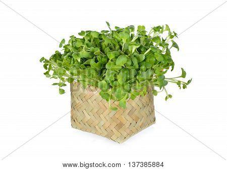 fresh radish sprouts or Kaiware Daikon in bamboo basket on white background