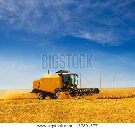 Harvester machine working in the wheat field in the end of June