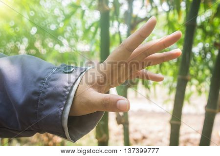 Open hand with palm up on tree background.success donation hungry plant concept .design nature color leaf bamboo show blurred connection.growth garden forest beautiful space.human care help offer.