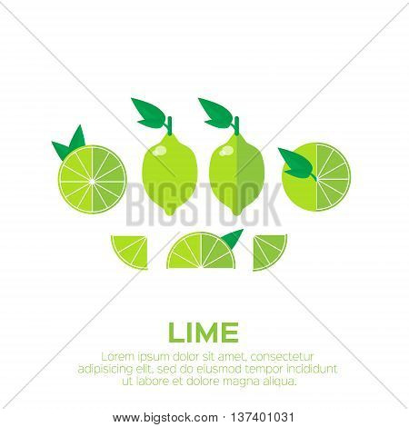 Summer set of lime fruits. Whole and cut half healthy limes. Vector illustration