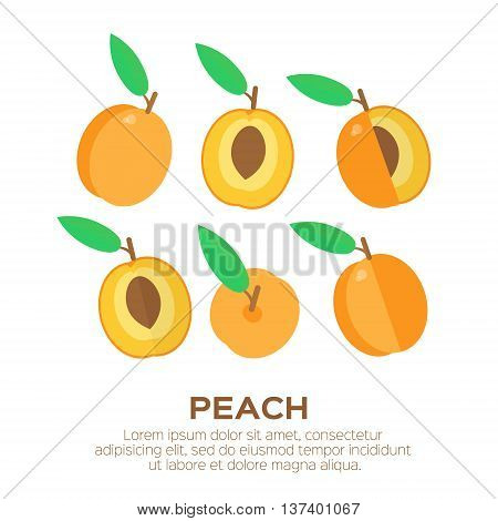 Summer set of peach with leaf. Whole and cut orange pears. Symbol of food sweet and vitamin healthy. Vector illustration