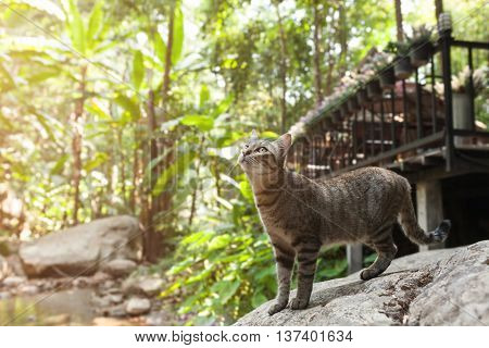 Side View Of A Cat Walking On Stone Near The River