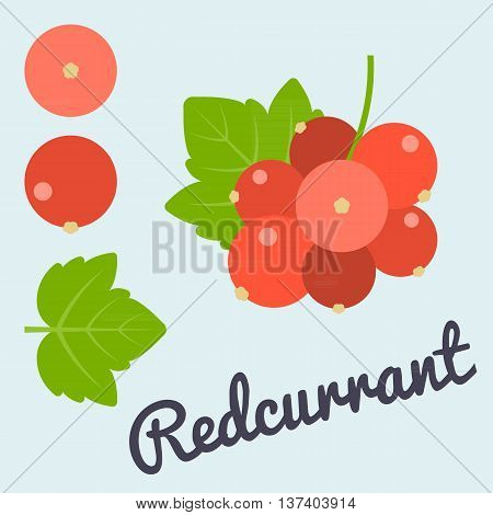 Vector bunch of Redcurrant and leaf, flat design