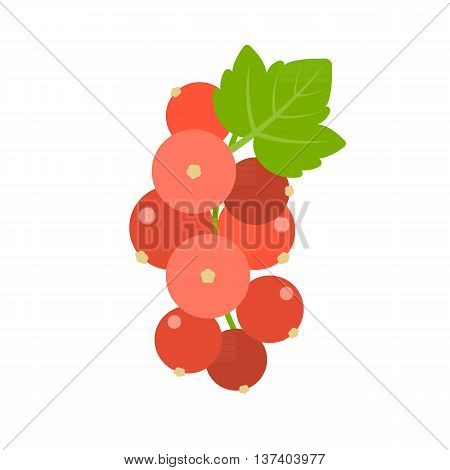 Vector bunch of Redcurrant, flat design no background