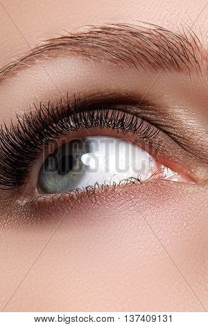 Macro Shot Of Woman's Beautiful Eye With Long Eyelashes