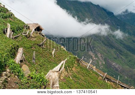 Gardens In The Mountains At  New Guinea