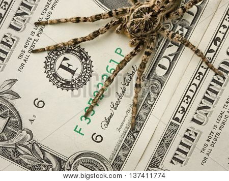 Spider Protecting Money