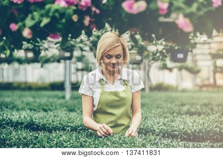 Taking good care of plants. Beautiful young blond hair woman in apron taking care of plants while standing in greenhouse