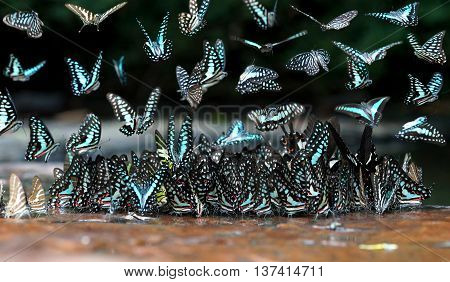 A pile of beautiful butterfly in nature