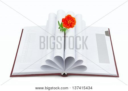 Book and flower isolated on white background