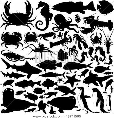 vetor de animais do mar