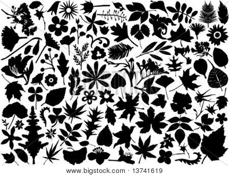 flower and leaf set vector