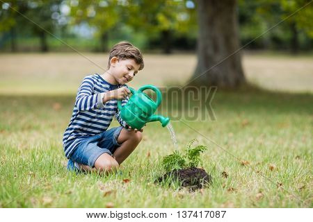 Smiling boy watering a young plant in park