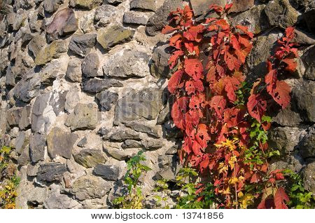 Plant Growing On A Wall