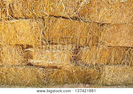 Pile of straw by product from rice field after collecting season in Thailand