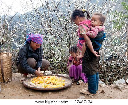 HA GIANG, VIETNAM, February 4, 2016 Hmong women and children, harvested corn, spring, highland Ha Giang, Vietnam