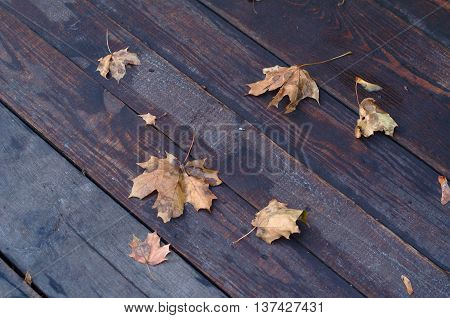 Wet Maple Autumn Leaves On Wooden Background