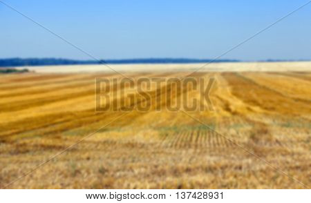 agricultural field where crops harvested cereals, wheat, Defocus