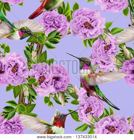 Pattern seamless. Floral background. Fine weaving lace mosaic. Bouquet of flowers of lilac roses. Little flying bird hummingbirds.
