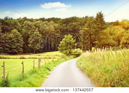 Idyllic country road with copy space and forest. Single lane road through fields and pastures, nature background.