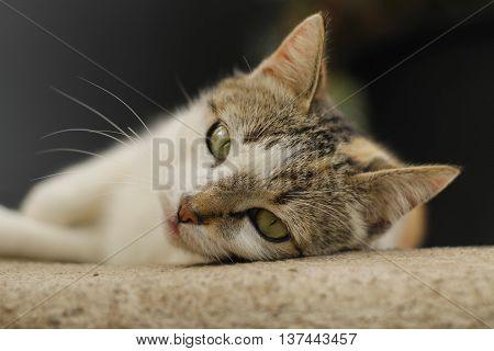 gato cat ternura dormir color blanco vida