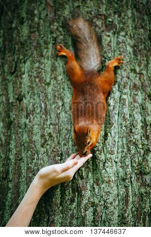 squirrel eating a nut from a hand on a tree