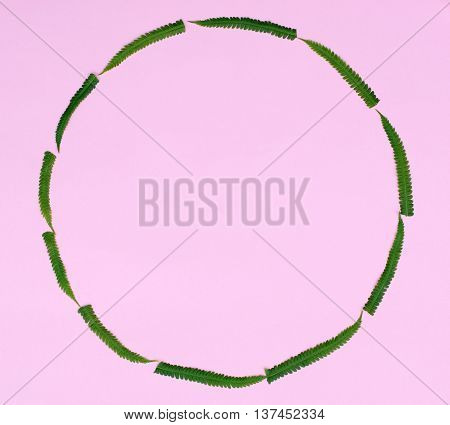 round frame on pink paper with green fern leaf background with space for inscription macro