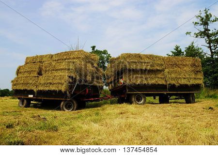 Straw bales on a trailer in a meadow