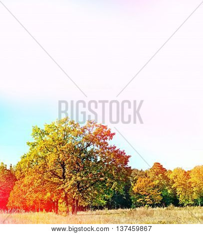 Autumn landscape. Colorful colorful trees in the park. Selective focus