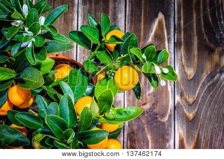 mandarine tree fruit on a wooden background