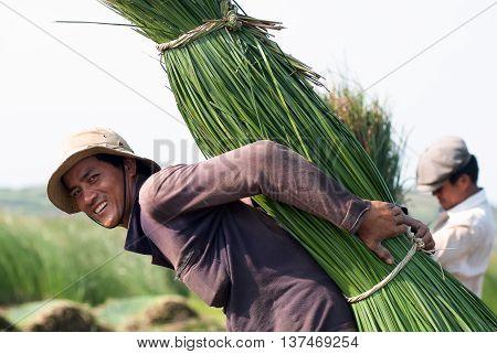 PHU YEN, Vietnam, June 18, 2016 the rural population Phu Yen, central Vietnam, harvesting papyrus