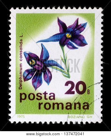 ZAGREB, CROATIA - JULY 18: A stamp printed in Romania shows Larkspur or Delphinium, series, circa 1975, on July 18, 2012, Zagreb, Croatia